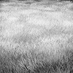 long grass texture perspective - Cerca con Google