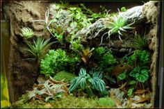 Custom Vivarium & Terrarium Background DIY Photo 3