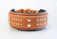 2″ Wide Padded Leather Dog Collar by dieselDOGwear