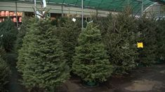 There's a Christmas tree shortage in metro Atlanta | WSB-TV