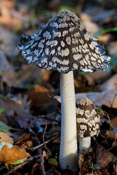 Having a busy background can make patterned mushrooms harder to see. Be cautious when photographing mushrooms with mottled or spotted patterns