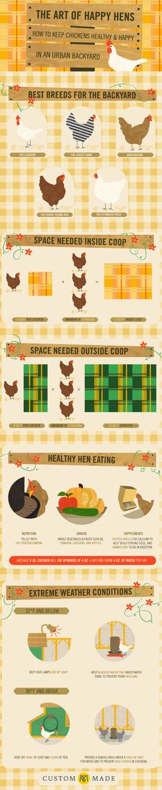 Chicken Coop - Keeping healthy and happy in an urban backyard.- Infographic Building a chicken coop does not have to be tricky nor does it have to set you back a ton of scratch. Easy Chicken Coop, Backyard Chicken Coops, Chicken Coop Plans, Building A Chicken Coop, Backyard Farming, Chickens Backyard, Backyard Coop, Urban Chickens, Pet Chickens