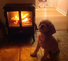 Cute little puppy in front of a Dimplex Oakhurst Opti-myst stove. | Keeping pets warm competition http://www.dimplex.co.uk/competitions/2015_11_microfire