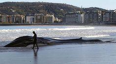 Una ballena muere varada en la playa de La Concha de San Sebastián. ATLAS