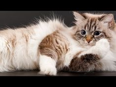 7 Things You May Not Realize About Your Cat