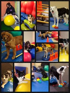 How to fit K9 Fitness into your schedule - Pawsitive Performance