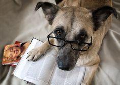 Livros Sobre Cães. Selecionamos os Livros Mais Interessantes sobre o mundo dos Cachorros. Leia e Aprenda sobre diversos temas: Adestramento, Alimentação, Saúde, Comportamento, Histórias, Raças, Dicas, Higiene, Psicologia, entre outros.