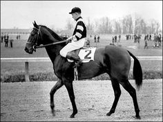 Triple Crown #4 - War Admiral - 1937  The great racehorse War Admiral was a black beauty from Pimlico, famous for winning the Triple Crown and losing a match race to Seabiscuit.