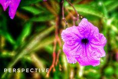 Phone Photography, Plants, Plant, Planets