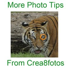 More Fun and EASY Photo Tips: Portrait Photography  From Crea8fotos