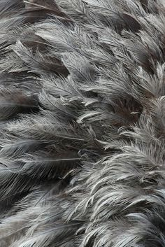 ~✿ڿڰۣ Grey Feathers