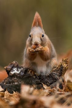 Squirrel + Nuts = Happiness