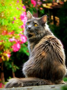 Die 7383 Besten Bilder Von Cats In 2019 I Love Cats Cutest