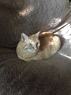 Marmalade loaf proofing on the dog bed