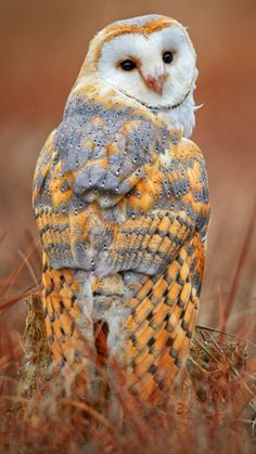 Beautiful owl.. looks like it's wearing sweater..
