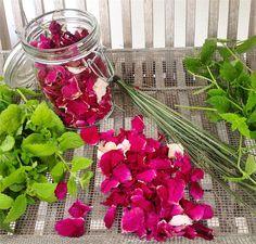 Elsker bare at dyrke og høste urter til min te. Her er det Citronmelisse Hyben rosenblade Citrongræs og Jordbærmynte #webshop #haveliv #egenomsorg #tedrikker #roser #jordbærmynte #citronmelisse #citrongræs