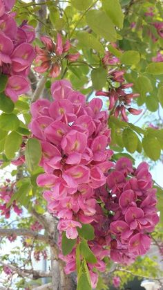 Pretty Flowers on a tree in California by Honey Lake