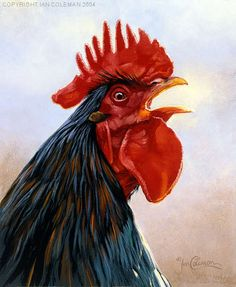 Cockerel