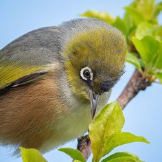 Nature Photography, Bird, Animals, Animales, Animaux, Birds, Nature Pictures, Animal, Animais