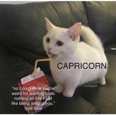 Zodiac Signs Capricorn, Capricorn And Aquarius, Pisces Facts, Zodiac Star Signs, Zodiac Facts, Scorpio Woman, Zodiac Funny, Zodiac Memes, Scorpio Funny
