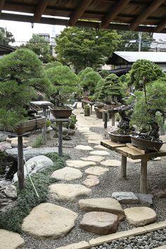 79 best bonsai garden images in 2018 Ficus Bonsai, Bonsai Plants, Bonsai Garden, Bonsai Trees, Mini Zen Garden, Plantas Bonsai, Garden Shelves, Japan Garden, Mini Bonsai
