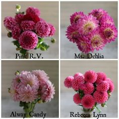 favorite pink dahlias from Floret www.floretflowers.com/blog
