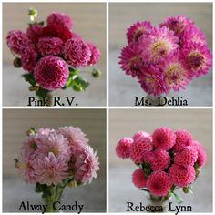 favorite pink dahlias from Floret www.floretflowers.com/blog