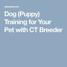 Dog (Puppy) Training for Your Pet with CT Breeder
