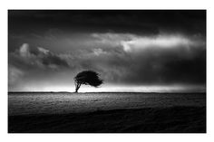 Windswept by Vulture Labs www.photography Vulture Labs: Photos BEM by Juan Pablo de Miguel, Above by Marc Adamus, homeland by andy dauer Photography Workshops, Fine Art Photography, Street Photography, Landscape Photography, Nature Photography, Exposure Photography, Black And White Landscape, Black White Art, Black N White Images