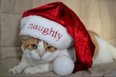 cats christmas | ... shirt for your Dad for Christmas ? Well, you're in luck , DUDE