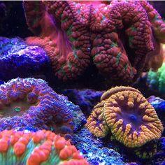 #ReefPro @newocean #polyplab