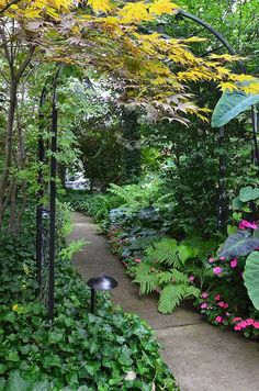 This garden is a shade lover's dream garden with towering trees and paths to intimate spaces. It is a very large garden that does not appear as such from the drive through the neighborhood to…