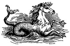 Hippocampus - In Roman lore, the Hippocampus was said to be the fastest creature in the ocean.