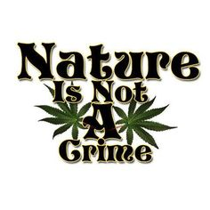 People should be able to grow marijuana, just like having a vegetable garden. To have medical marijuana legal to patients and for them not being able to grow it, is wrong. A great ebook that has interesting recipes for Dragon mints and Cannabis chocolates: MARIJUANA - Guide to Buying, Growing, Harvesting, and Making Medical Marijuana Oil and Delicious Candies to Treat Pain and Ailments by Mary Bendis, Second Edition. Only 2.99. www.muzzymemo.com