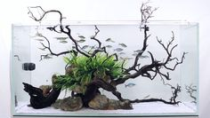 Amazing aquascape woodscape and hardscape with Rocks (740×420) floating Island