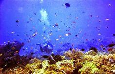 Snorkeling di Banyuwangi harus menjadi bagian dari weekend list mu! . Snorkeling dan Berenang Bersama Hiu? Cuma Ada di Banyuwangi!