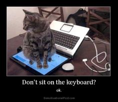 -Don't sit on the keyboard?  -Ok