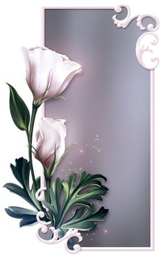 Boarder Designs, Page Borders Design, Wall Art Designs, Butterfly Pictures, Rose Pictures, Flower Phone Wallpaper, Cellphone Wallpaper, Flower Backgrounds, Wallpaper Backgrounds