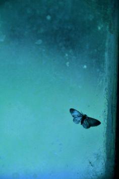 Blue | Blau | Bleu | Azul | Blå | Azul | 蓝色 | Color | Form | Texture | butterfly