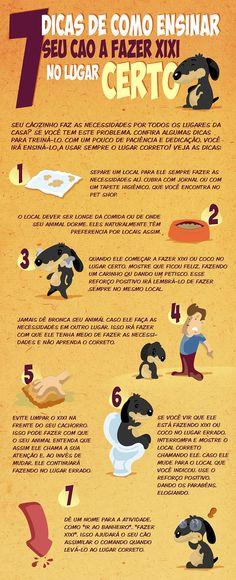 Necessidades no lugar certo - Infográfico: site Como Adestrar um Cão