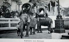 Elephants of Siam
