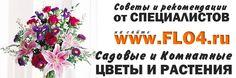 сайт о цветах мир в цвету
