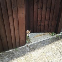 Keeping your pet escape artist from going on the run.