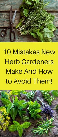 Fresh herbs are one of the greatest ways to increase the taste of your food healthfully. I often toss whatever leafy herbs are hand liberally into a salad to add unexpected variations in flavor (ba… garden Growing Herbs, Growing Vegetables, Gardening For Beginners, Gardening Tips, Types Of Herbs, Herb Garden Design, Medicinal Herbs, Edible Garden, Kraut