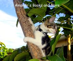 Picture Perfect Party Linky #23 ~ Cute photos of Amanda swimming and our kitten climbing a tree, plus a  Wordless Wednesday blog hop!  http://abooksandmore.blogspot.com/2013/01/picture-perfect-party-linky-23.html#