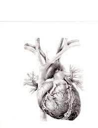 Image result for human heart art projects