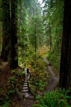 Sequoia Park Eureka California