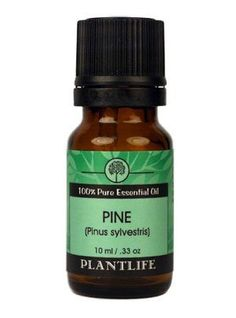Pine Needle 100% Pure Essential Oil - 10 ml by Plantlife. $5.30. Pine Needle acts as an expectorant to loosen congestion and relax the respiratory passages. Good for lice, scabies, muscular aches, poor circulation, asthma, bronchitis, coughs, sinusitis, sore throat, colds, flu and fatigue.