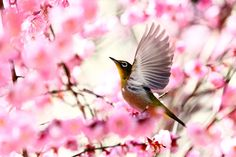 "500px / Photo ""Spring Greetings"" by Ken Shimo"