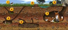 there is an image of an underground cross section, containing the following animals.